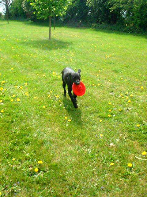 Dog and Frisbee at Clifftop Boarding Kennels and Cattery, Lincoln
