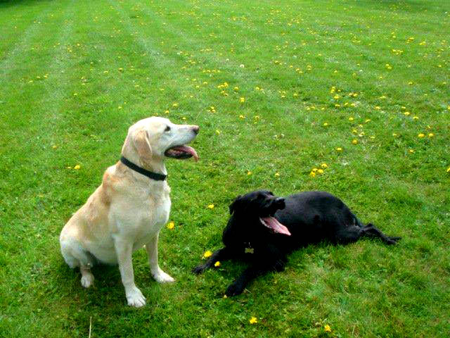 Dogs Playing at Clifftop Kennels, Lincoln