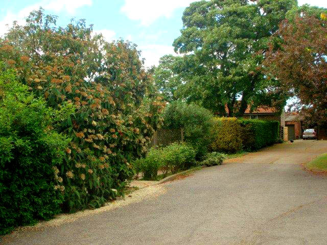 Mature Trees and Shrubs at Kennels and Cattery Lincoln